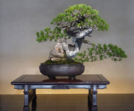 neues aus japan bonsai. Black Bedroom Furniture Sets. Home Design Ideas